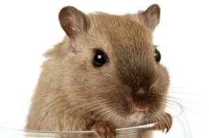 Rodent and Rat Control in Nagpur